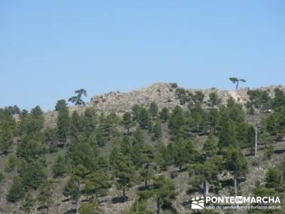 Cuerda de Cuelgamuros - Senderismo Ávila - Ruta Madrid; parque natural alto tajo